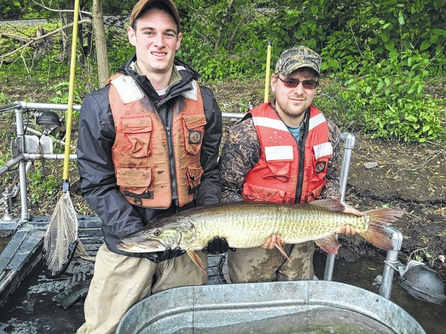 Fish and Boat Commission making changes to muskie management