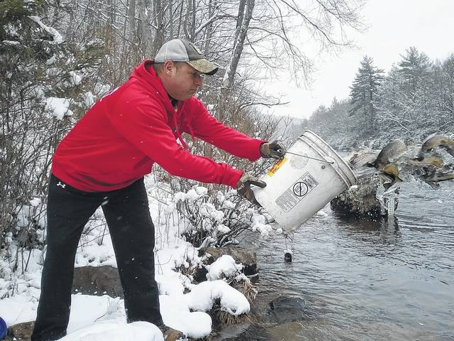 Despite snowy conditions, the Pennsylvania Fish and Boat Commission was able to stock the Francis E. Walter Dam and Lehigh River on Friday. Dan Zlockie dumps a bucket of trout in the river below the dam. Tom Venesky | Times Leader
