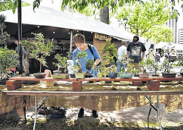 Bonsai Trees Part Of Shoppers Bounty At Fine Arts Fiesta Times Leader