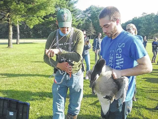 fa0df172582 PGC banding program sheds light on resident goose population | Times ...