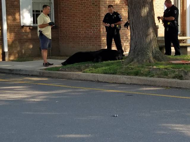 300-pound black bear removed from tree outside PNC Bank in