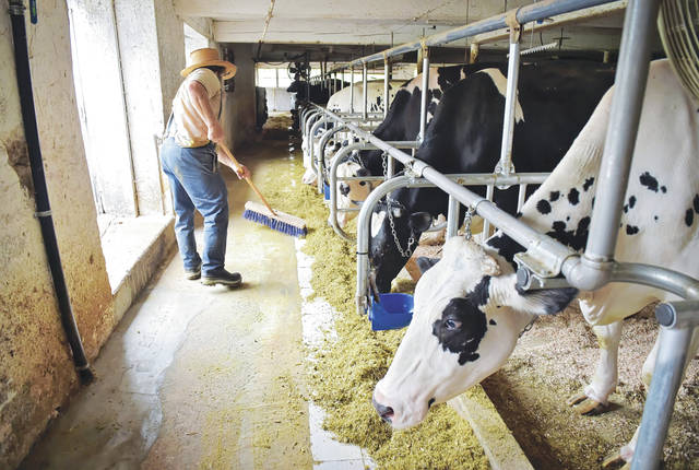 The farmer sweeps his barn. Frustrated Plain Sect farmers in Lancaster County and around the state have banded together to protest — and in at least one case, sue — over the way milk is controlled, priced and sold after leaving their milking barns.