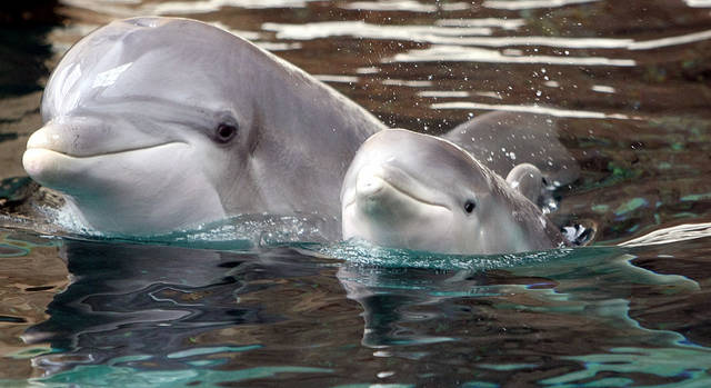 Dolphin diets shows how climate change could alter food chains off ...