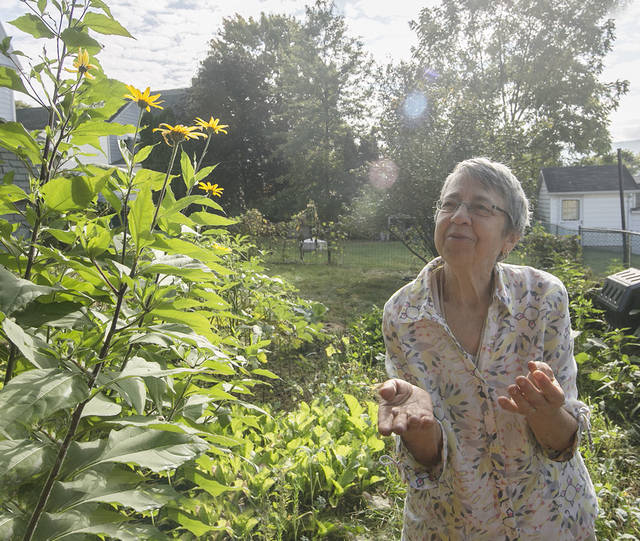 The Jerusalem artichoke plant in her backyard is part of the sunflower family, Therese Inverso said, and she is looking forward to harvesting and eating some of its tubers that grow underground.