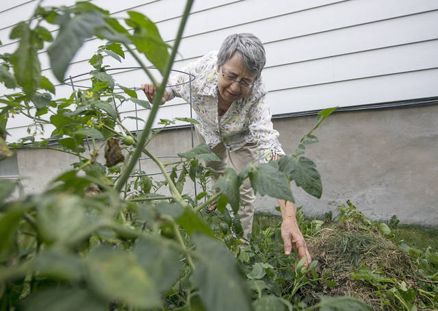 Next to some plants that are common in Northeastern Pennsylvania gardens, such as tomatoes, Therese Inverso has planted less typical crops such as peanuts.