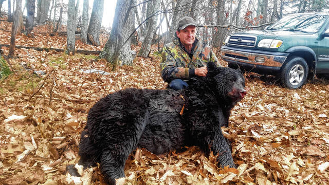Rich Kollar of Shickshinny harvested this 561-pound bear in Ross Township on the Saturday opener of the statewide bear season.