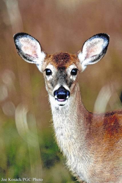 Hunters encouraged to donate venison this season
