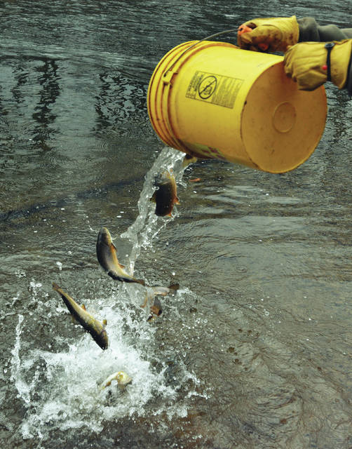 Gearing up for the trout season opener times leader for Pa fish stocking