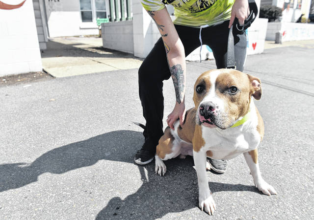 Looking for a pet? SPCA may have one for you