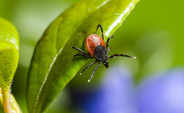 Climate change may mean more ticks