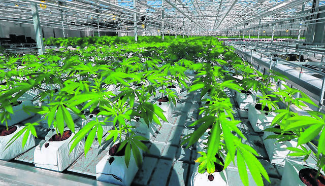 Pa  issues permits for medical marijuana dispensaries in