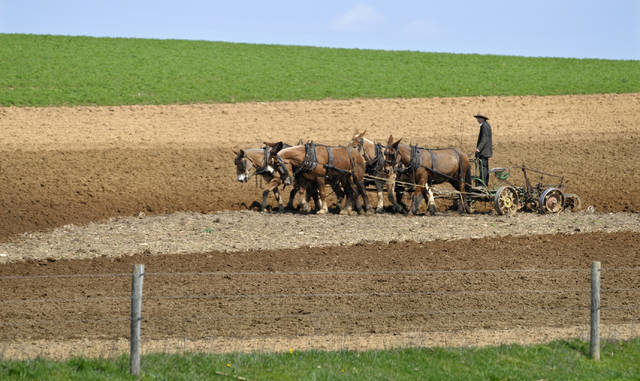 Lancaster County Amish population grows | Times Leader