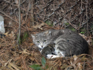 With proposed ordinances to come before council Monday, WB feral cats becoming hot-button issue