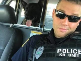 Suit filed by Wilkes-Barre police officer to have K-9 dog retired to him