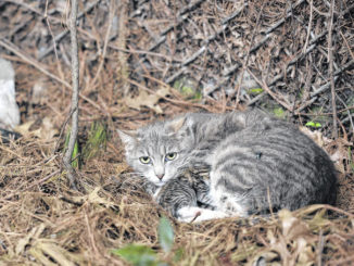 Free workshop in Wilkes-Barre Wednesday on dealing with feral cats