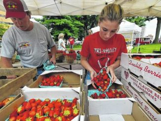 'Wilkes-Berry' fetes strawberries at downtown festival