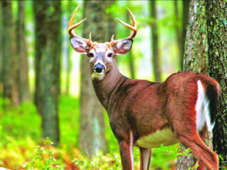 PA continues push for dedicated fish and wildlife conservation funding