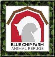 Pit bull killed after attacking volunteer at Blue Chip Farm