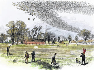 PA Game Commission to present passenger pigeon program Sept. 11