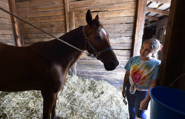 Nehaeh Schneider, 11, of Dupont PA, talks to Wawa the horse she is preparing to drive during jogging practice on Tuesday at The Downs at Mohegan Sun Pocono. Aimee Dilger   Times Leader