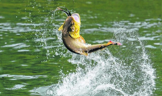 Bass Casters Tournament results | Times Leader
