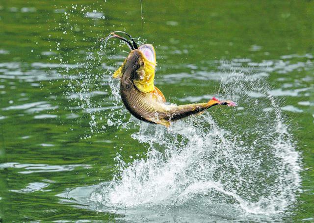 https://s24526.pcdn.co/wp-content/uploads/2019/08/web1_bass-fishing-wallpaper-C.jpg