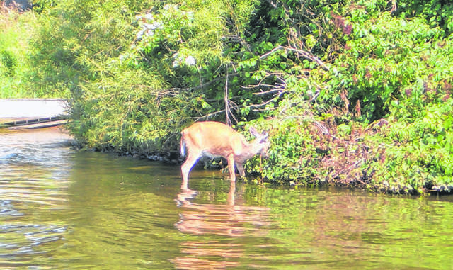 Chronic wasting disease rules affect out-of-state hunters