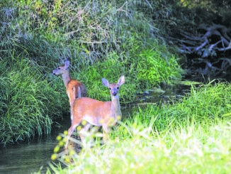 PA Game Commission says additional antlerless deer tags available