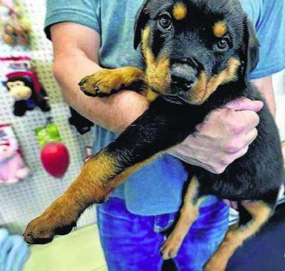 Lancaster Man Charged With Stealing Puppy From Wilkes Barre Pet
