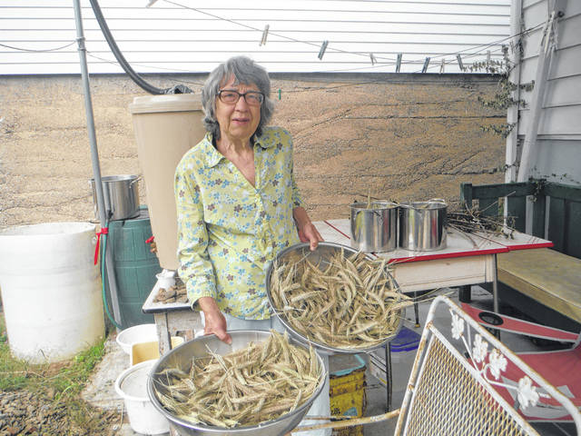 <p>Her Wilkes-Barre backyard includes a rainbarrel, many plants and the tops of rye plants that Therese Inverso has harvested with the intention of using them for homemade bread.</p> <p>Mary Therese Biebel | Times Leader</p>