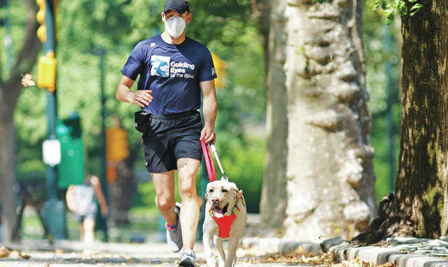 Thomas Panek runs with his running guide, Blaze, a Labrador retriever in Central Park in New York. Panek, a blind runner with a wall full of ribbons from marathons he ran with a human guide, developed a canine running guide training program five years ago after he became president and CEO of Guiding Eyes for the Blind in suburban New York. AP photo