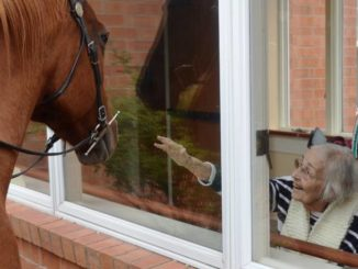 Horses brighten spirits at Wesley Village