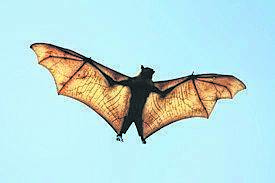 You can learn about bats, which help keep insects like mosquitoes, beetles, corn borers, June bugs, gypsy moths, grain moths, cutworm moths, potato beetles and grasshoppers under control, during a program planned for Oct. 10 at Hickory Run State Park.                                  Times Leader file photo